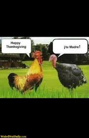 Pics Of Happy Thanksgiving Funny Pictures Weirdnutdaily Happy Rooster Thanksgiving