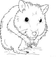 Coloriage Hamster dans la nature à imprimer sur COLORIAGES info
