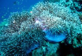 diving for christmas island treasures parks australia