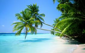 beaches islands landscapes nature palm trees tropical