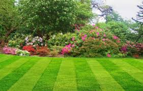 Fall Cleanup Landscaping by Spring Cleanup Fall Cleanup Dethatching Schenectady Ny