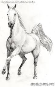 pencil sketch ᎪᎡᎢ pinterest sketches horse and drawings