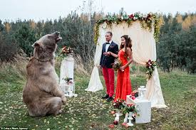 russian wedding russian invite grizzly to be a part of their wedding