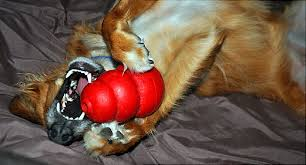 How To Get A Comfort Dog Top 12 Dog Training Problems Barking Aggression Whining U0026 More