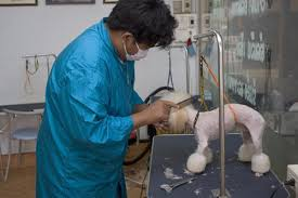 different styles of hair cuts for poodles grooming needs of poodles pets