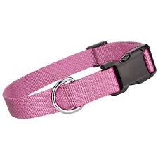 collar light for small dogs pink collar for small dogs pink dog collar pupaholic com