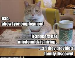 Newspaper Cat Meme - u can flip cheezburgers i can has cheezburger