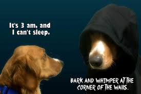 T Dog Memes - there s a little bit of dark side dog in every dog even your