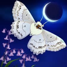 Shoo Rainforest Shop flutter starlight on the app store
