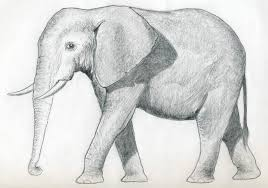 coloring pages pretty easy elephant drawing coloring pages easy