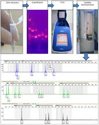 full text forensic dna profiling state of the art rrfms