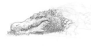let u0027s draw real life dragons muddy colors