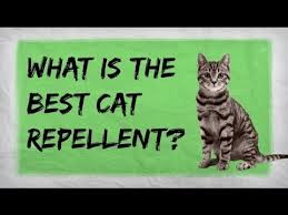 How To Keep Cats Out Of Your Backyard Natural Cat Repellent Best Indoor And Outdoor Repellents For