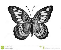 b u0026w butterfly royalty free stock photos image 30404688