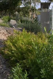 Australian Garden Ideas by 175 Best Garden Inspiration Images On Pinterest Australian