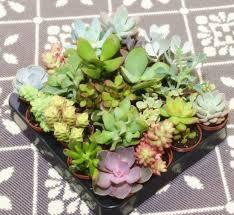 succulent kits mini geometric glass vase succulent terrarium kit by dingading