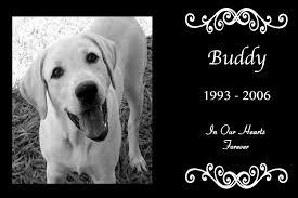pet memorials pet memorials granite dog wheelchairs dog carts handicapped