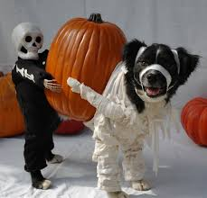 Cute Dog Halloween Costumes 30 Halloween Dog Costumes Put Smile Face