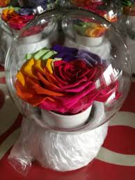 9 10cm big size long life preserved rose in glass tube dome