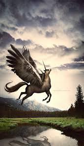 2485 best a pegasus uniz images on pinterest pegasus unicorns