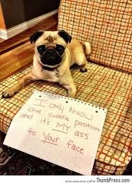 Dog Shaming Meme - dogs with notes the best of dog shaming 50 funny pictures