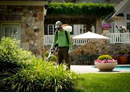 Eliminate Mosquitoes In Backyard by Blog Mosquito Squad