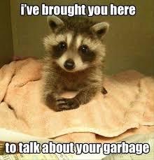 Funny Raccoon Meme - 13 hilarious raccoon memes i can has cheezburger