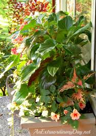 Flowers For Window Boxes Partial Shade - beautiful window boxes for shade the window box dirt simpleeasy