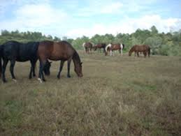 California Flag Horse Adopt A Rescue Horse What You Need To Know Heart The Cause A
