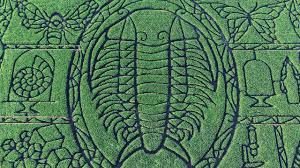 giant trilobite crashes wisconsin corn field science aaas