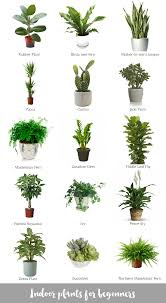house plants that don t need light indoor plants for beginners snake plant low lights and snake