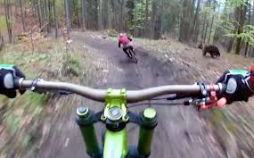 jeep wrangler mountain bike bear chases mountain biker at bike park in slovakia video
