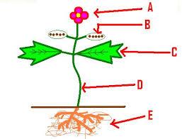 plants review quiz mr prochaska u0027s 5th grade science proprofs quiz