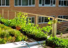 urban agriculture michigan state university