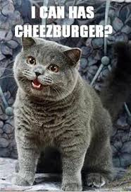 Cats Memes - 15 best cat memes ever