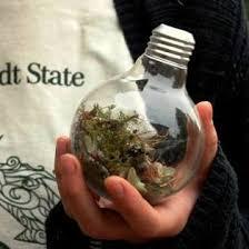 how to make a mini terrarium from an incandescent light bulb u2013 diy