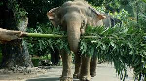 elephants hd images pictures and free wallpapers download