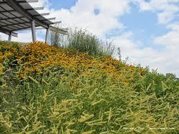 iowa native plant society t h e d e e p m i d d l e native plant gardens in lincoln