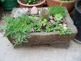 Rock Garden Perennials by Plant A Miniature Rock Garden Gardening In A Hypertufa