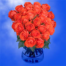 colored roses coral colored roses show girl variety global