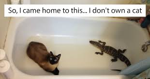 Mean Kitty Meme - 10 of the best i don t own a cat moments that have ever
