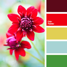 bright red color of old gold color of wine color palettes for