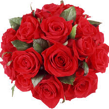 bulk roses wholesale distributors miami flower market fresh bulk roses