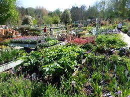 garden plants prior park garden centre