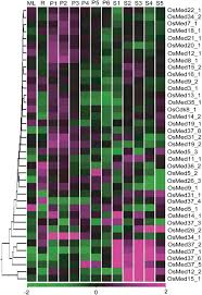 the mediator complex in plants structure phylogeny and