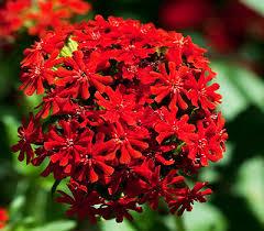 redding ca plants nursery bailey for mediterranean plants