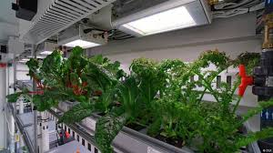 for a these superb antarctic veggies are a tasty preview for a menu on mars