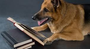 20 resources for beginners u0027 german reading practice fluent in 3