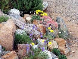 Creating A Rock Garden Creating A Rock Garden Where Plants Are Best Placed Interior