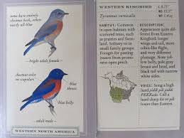 Backyard Birding Magazine Az Birdbrain Sibley Backyard Birding Flashcards